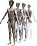 human3dbody1